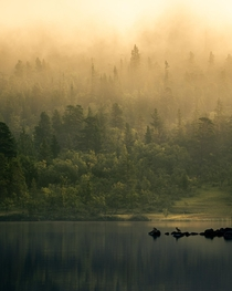 Magical morning at Grvelsjn Sweden  hedbergphotos