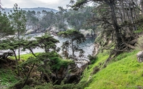 Magical Point Lobos One minute youre hiking along the open coast the next your surrounded by a pine forest