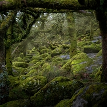 Magical scene in Wistmans Wood Dartmoor England