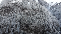 Magnificent frozen trees Chteau dOex Switzerland  Watch it in K video in the comments
