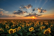 Magnificent Sunset over a Sunflower Field near Aksakovo Bulgaria  by Evgeni Ivanov