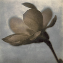 Magnolia profile Unique Silver Print