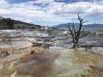 Mammoth Hot Springs Yellowstone National Park What a geological wonder