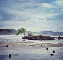 Mango tree growing from wrecked barge on the Caribbean side of Costa Rica