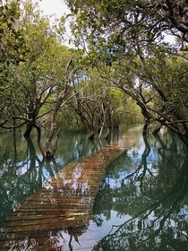Mangrove swamp Paihia New Zealand