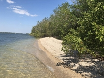 Mangroves and shell beaches in the Cape Coral bay Florida