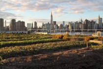 Manhattan from a Brooklyn flowerbed