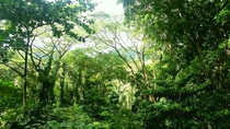 Manoa Falls Trail Oahu Hawaii