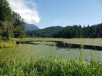 Marshlands in British Columbia