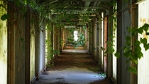 Massive abandoned interconnecting overgrown corridors