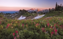 Mazama Ridge Wildflower Sunset By Ray Green