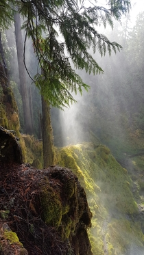 McKenzie River Trail OR