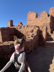 Me and my pup Debbie checking out some native ruins in New Mexico