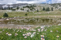 Meadows and tarns galore at Medicine Bow Mountain WY