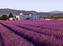 Mediterranean vegetation lavender in Provence x-post rFrancePics