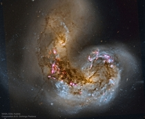 Merging galaxies NGC  and NGC  in the middle of a starburst phase in which the collision of massive clouds of gas and dust with entangled magnetic fields has triggered rapid star formation They are about  million light-years away in the constellation Corv