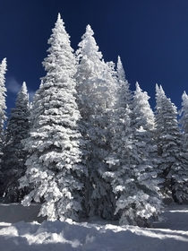 Merry Christmas from the white trees and blue skies of the Rocky Mountains