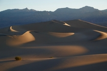 Mesquite Flat Sand Dunes at Sunrise Death Valley National Park in California