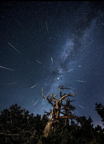 Meteor Shower in Colorado