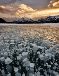 Methane bubbles trapped in Abraham Lake AB  photo by Paul Didsayabutra