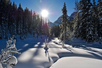 Mid- day sun in the dead of winter - Kananaskis Country AB Canada -