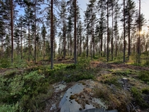 Midsummer evening in a forest at Himos Finland