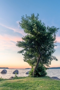 Mighty tree by the lake Germany