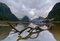 Milford Sound foreshore A stick in the mud