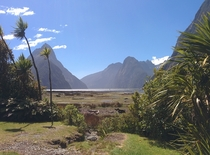 Milford Sound on a sunny day - New Zealand