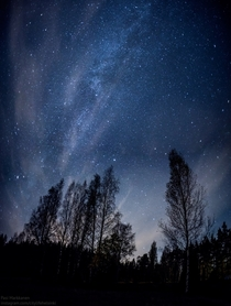 Milky way above the trees