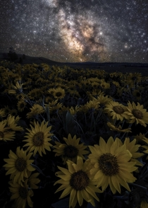 Milky Way Dreams Heres a photo of some wildflowers with the Milky Way above them from this spring here in Oregon Thanks for stopping by and I hope everyone has a good weekend OC  IG john_perhach_photo