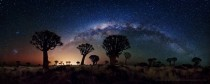 Milky Way over Quiver Tree Forest in southern Namibia