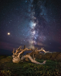Milky Way over some driftwood in Nova Scotia Canada  x