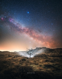 Milky Way rising over a lonely tree in Skagen Denmark  astrorms