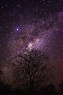 Milky Way rising over a willow tree