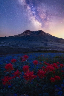 Milkyway shines above summer wildflowers in Mount Saint Helens National Volcanic Monument area