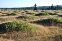 Mima Mounds South of Olympia WA Unexplained geographical oddity