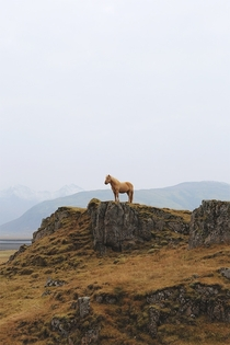 Miniature Horse Southern Iceland