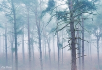 Miss the foggy mornings Kings Woods England  x
