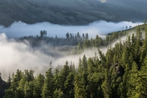 Mist rolling over the hills of Yellowstone at AM