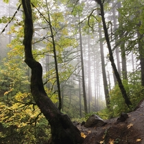 Misty day on the Horsetail Falls Trail OR