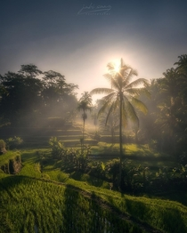 Misty morning at the rice paddies in Bali Indonesia OC  jabisanz