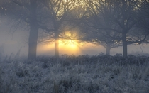 Misty Morning in Richmond Park London England