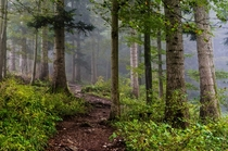 Misty morning in the forest - Val de Travers Switzerland