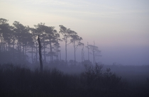 Misty morning on Tingles Island Assateague National Seashore