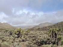 Mojave Desert meets the Sierra Nevada Walker Pass Ca