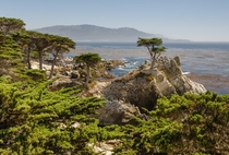 Monterey Cypress near the Kelp Forests by Tuxyso