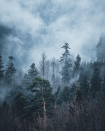Moody Black Forest on Germany x oC