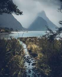 Moody days at Milford Sound The worse the weather is here the more epic it looks Milford Sound NZ
