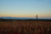 Moon disappearing over a recovering forest in the British Columbia Canada Wilderness